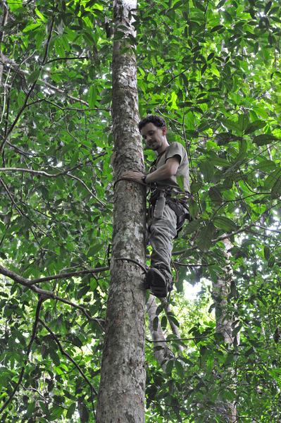 Récolte de feuilles dans les arbres à identifier. C.Delhaye - CNRS